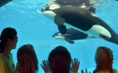 SeaWorld brings in new vice president of IR